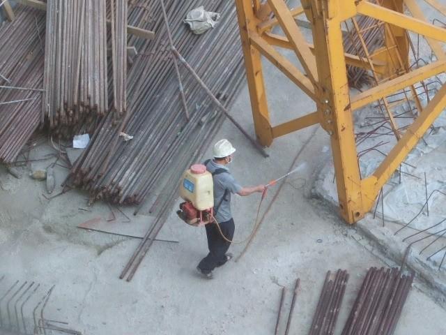 东莞白蚁防治,龙科服务覆盖全东莞,专业高效保质期长