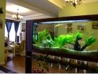 鱼缸清洗 公司专业承接上门清洗鱼缸定期护理鱼缸鱼只调理水质