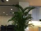 白云区租花,植物租摆,室内绿化植物买卖,免费送货