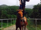 莫干山沈园户外拓展基地团队建设拓展训练亲子活动骑马索溜