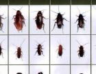 沃创专业害虫防治(鼠类,蟑螂,蚊蝇等),甲醛除理