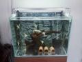 出售鱼缸和鱼