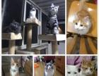 天津猫咪寄养25元一天猫咪家庭式寄养