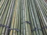 北京河北唐山及周邊綠化杉木桿竹竿
