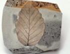 哪里直接收购化石,奇石,有私人收购化石吗