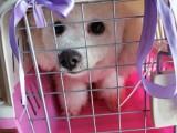 廣州寵物托運多少錢