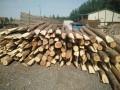 大量批发 回收各种新旧松木杆 绿化杉木杆,高压防护电线杆