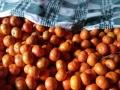 有大量脐橙柑橘批发