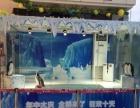 海洋生物展览观赏鱼缸租赁活体企鹅展览展示价格