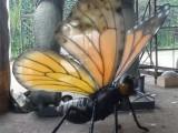 超酷昆虫展出租-昆虫展出售