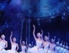 芭蕾形体、佛朗明哥、印度舞、踢踏舞、道具秀、扇子舞、动感啦啦