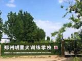 鄭州明星犬學校專業訓犬