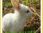 宠物兔野兔小兔批发