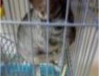营口市内出售龙猫