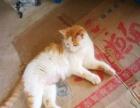 自家的小猫,欢迎爱猫人士咨询