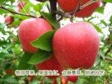 苹果树苗多少钱一棵