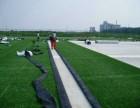 北京人工草坪哪里卖假草坪厂家