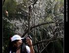 每周末:御景峰国家森林公园赏梅花喝青梅酒