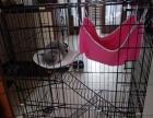 全新猫笼子80