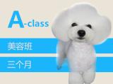安徽宠物美容考证培训需要多少钱