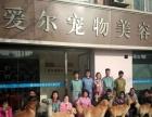 青岛宠物美容培训班,青岛爱尔宠物美容学校