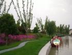 花卉绿植租摆大渡河路金沙江路丹巴路怒江北路梅川路