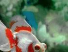 各类观赏鱼 龙鱼 鹦鹉等等 定做鱼缸 成品鱼缸