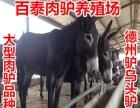 出售西门塔尔牛鲁西黄牛,利木赞牛,三元杂交肉牛种牛,肉牛犊