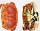 河南郑州大闸蟹批发就到专业的四海美来市场