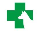 夏季必备!狗狗中暑症状以及抢救方法-佳雯宠物医院