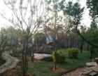 马侨农家乐山庄700平米占地4亩 带果树花园停车场出租