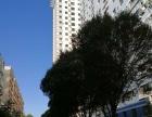 北京路高新街大卧室出租 700元/月(包暖气包物业)无中介费