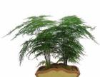 广州专业植物租摆,花木,植物出租,室内植物绿化