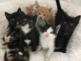 无锡全国发货 也可视频挑选猫咪