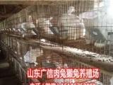 安徽肉兔养殖场,安徽伊拉种兔养殖基地