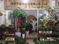 金华市专业绿植花卉租赁,短期租赁,室内、庭院美化