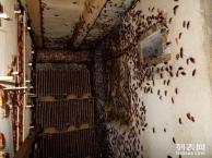 大朗防治白蚁,常平灭治白蚁所,寮步白蚁防治所