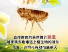 上海商场杀白蚁灭四害杀臭虫公司