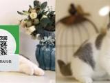 绵阳哪里有蓝猫出售 绵阳蓝猫价格 绵阳宠物狗出售信息