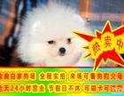 狗證 健康證 血統證 純種健康球體博美犬 簽訂協議