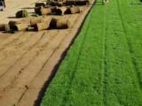 北京草坪價格,北京種植草坪