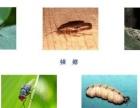 清洗地毯大理石翻新瓷砖抛光打蜡消杀灭蚊子灭白蚁