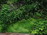 北京安装植物墙批发