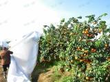 柑橘防寒布价格