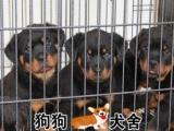 罗威纳犬舍,专业繁殖罗威纳犬,赛级罗威纳,公母都有