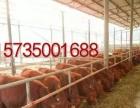山西肉牛价格山西肉牛品种山西养殖场