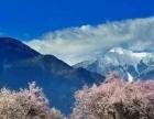 探访高原春色—西藏林芝波密逐花十日