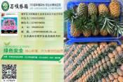 惠州凤梨专业供应商——广州凤梨
