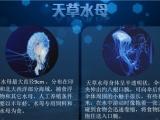 福建亚克力水母缸生产-想买新品活体水母,就到帝幽