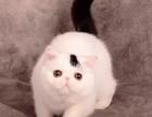 哪里出售纯种加菲猫纯种加菲猫价格多少